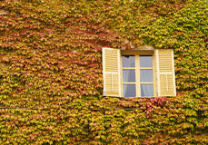 Open window among leaves Royalty Free Stock Photos