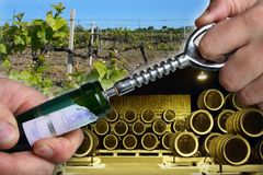 Open wine bottle. Man hands open wine bottle with corkscrew over vineyard and wine cellar royalty free stock photography