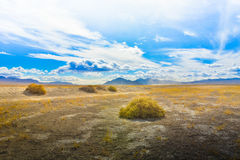 Open Woestijnweide en Struiken Royalty-vrije Stock Fotografie