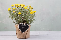 open your heart - beautiful  flowers in pot with message card Royalty Free Stock Photography