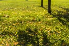 Openbaar de zomerpark onder de zonneschijn met de lopende mensen stock foto