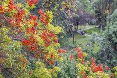 Openbaar park in Santiago Stock Fotografie