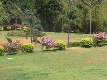 Openbaar tuin mooi gazon met zeer mooi het kijken met kleurrijke bloem Royalty-vrije Stock Afbeeldingen