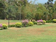 Openbaar tuin mooi gazon met zeer mooi het kijken met kleurrijke bloem Royalty-vrije Stock Foto's