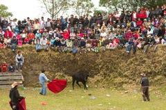 Openbare stieregevechten Royalty-vrije Stock Afbeeldingen