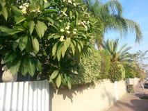 Openbare tuin Royalty-vrije Stock Foto's