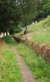 Openbare Wegbesnoeiingen door een Ongebruikte Begraafplaats Royalty-vrije Stock Afbeelding