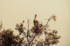 Openbill-Storch auf Baum Stockbilder