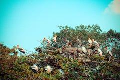 Openbill-Storch auf Baum Stockbild