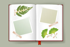 Opened Album With Blank Photo Frames And Dried Leaves. Overhead view of opened photo album with scraps of photo frames clipped on it. Dried leaves of fern and Stock Image