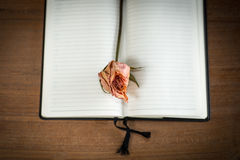 Opened blank notebook with old rose Royalty Free Stock Photo