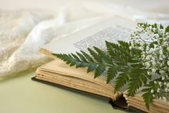 Opened Book with Fern Leaf and Baby Breath Flowers Royalty Free Stock Photography