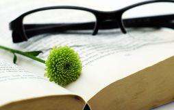 Opened book with glasses and flower. Brake in reading book - opened book with small green flower and modern looked glasses in black Royalty Free Stock Photo