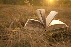 Opened book with landscape. Lying on yellow grass on sunset Stock Image