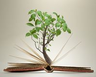 Opened book pages with green foliage on tree stock photography