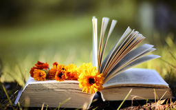 Opened book in yellow autumn Stock Photography