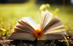 Opened book in yellow autumn Royalty Free Stock Image