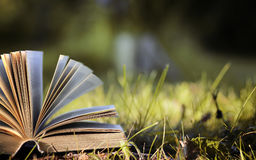 Opened book in yellow autumn Stock Image