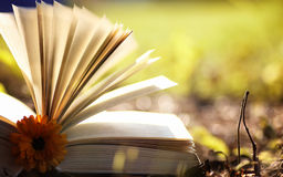 Opened book in yellow autumn Royalty Free Stock Photo