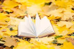 Opened book in yellow leaves Stock Photography