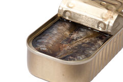Opened can of sardines on white background Stock Image