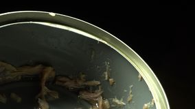 Empty can of tuna fish. Opened can with tuna fish flakes leftoversn stock video footage
