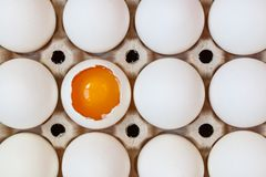 Opened chicken egg with yolk among whole eggs in cardboard tray closeup. Top view Royalty Free Stock Photo