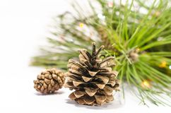 Opened and closed pine cones close-up against pine needles and Chr Royalty Free Stock Photography