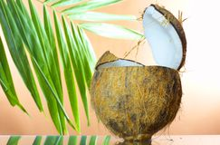 Opened coconut Royalty Free Stock Images