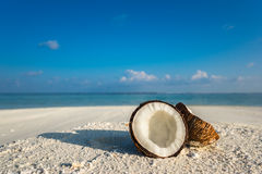 Opened coconut on the sandy beach of tropical island Stock Image