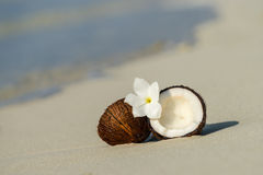 Opened coconut on the sandy beach of tropical island Stock Photography