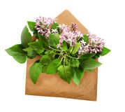 Opened craft paper envelope with lilac flowers bouquet Royalty Free Stock Photos