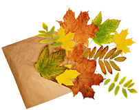 Opened craft paper envelope with scattered dry autumn leaves Stock Photography