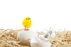 Eggs in the nest Stock Images