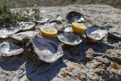 Opened empty oyster shells on sea coast Stock Photo