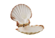 Opened empty scallop shell Royalty Free Stock Image