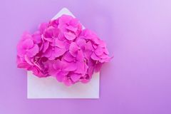 Opened envelope with pink hydrangea flower on a gentle lilac background. Layout for postcards. Copy space stock photo