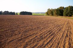 The opened field. Landscape with the opened field trees and a line of an arable land Stock Photos
