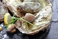 Fresh oysters with ice and lemon stock photo