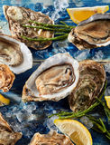 Opened fresh raw marine oysters stock images