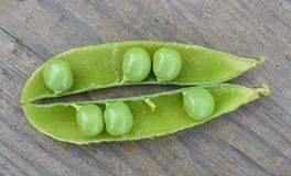 Opened green pod with peas inside close-up royalty free stock images
