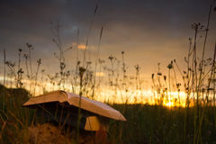 Opened hardback book diary, fanned pages on. Blurred nature landscape backdrop, lying in summer field on green grass against sunset sky with back light. Copy royalty free stock photo