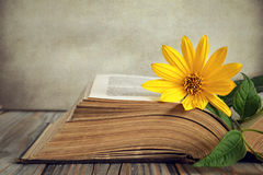 Opened old book and yellow flower Stock Image