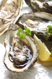 Opened oyster