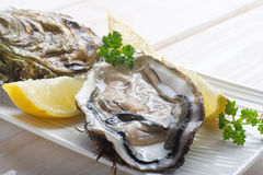 Opened oyster. With lemon and parsley on dish royalty free stock images
