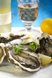 Opened oyster Royalty Free Stock Photos