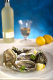 Opened oyster Stock Image
