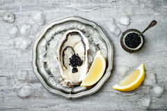 Opened oyster with black sturgeon caviar and lemon on ice in metal plate on grey concrete background. Top view, flat lay. Copy space Royalty Free Stock Photography