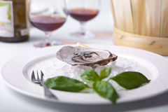 Opened oyster on ice Stock Image