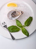 Opened oyster on ice royalty free stock images